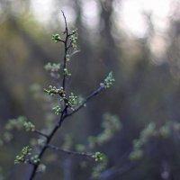 Первые признаки весны... :: Мария Соколова