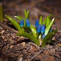 Первый цветок :: Маргарита Си
