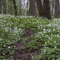 весенний лес :: Юлия Фалей