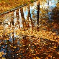 Осенние мотивы :: Виктория Браун