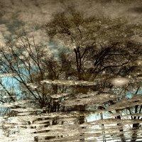 Отражение в луже :: Ynona Надежда Борисенко