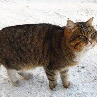 Хитрый кот. :: Светлана Н