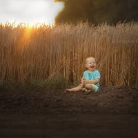 веселье в пшенице :: Вера Кристеченко