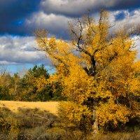 Осень пришла :: snd63 Сергей