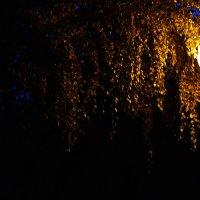 Золотая россыпь во мгле осени :: Anna Li