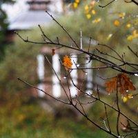 Опять осень... :: Игорь