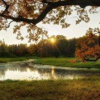 Осень ... :: Оксана Онохова
