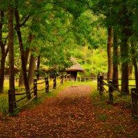 Дорога в осень... :: Lanna