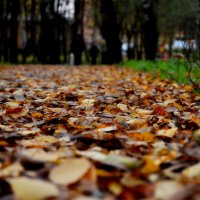 Золотые ковры осени :: Анастасия Кузина
