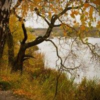 Это осень ... :: Ольга Винницкая (Olenka)