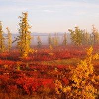 Чудесная осень :: ГАЛИНА Баранова