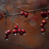 Слезы осени :: Van Der Graaf