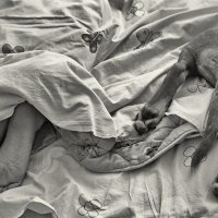 Девочки спят :: Юлия Никитина