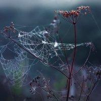 Любимое время суток :: Юлия Моисеева