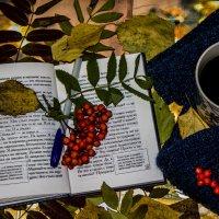 Осеннее книжное  утро :: Кристин Мин