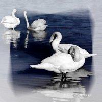 Чистота и красота. :: Liudmila LLF