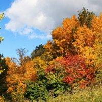 Наша золотая осень :: Ирина Козлова