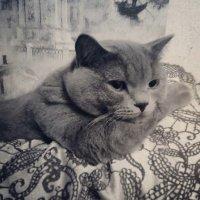 Фото котейки :: Мила Цымбалова