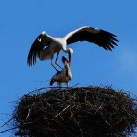 зов весны :: linnud