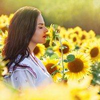 Цветы солнца :: Александр Кобелюк