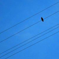 одинокая птица :: Галина