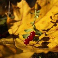 Осенний лесной этюд :: Татьянка *