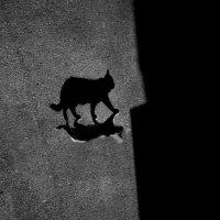 Два мира :: Андрей Молчанов