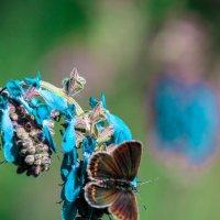 Мир бабочек :: Виктория