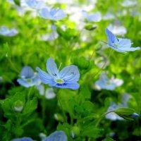 Flowers :: Виктория Чурилова