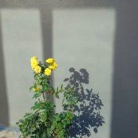Тень и отражение... :: Тамара (st.tamara)