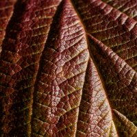 Осень :: Yuri Silin