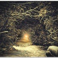 Волшебный лес :: Евгений Кочуров