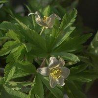 Утреннние цветы на даче :: Анна Углова (Рыбакова)