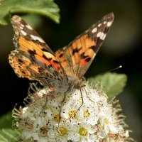 Сладкий нектар :: Нина Синица