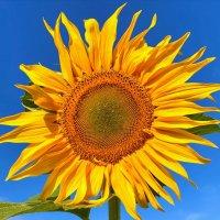 маленькое солнце :: Александр лялин