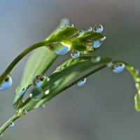 Голубой дождь :: НАТАЛЬЯ