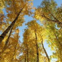 Солнечная Осень. :: Нина Сироткина