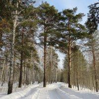 Прогулка по лесу. :: Kristina Fil