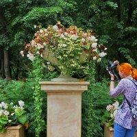 В Нескучном саду :: Liliya Kharlamova