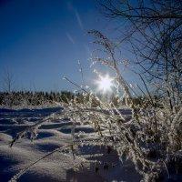 Блестя на солнце, снег лежит... :: Александр Силинский