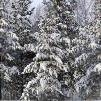 Снегом занесенные. :: Галина Кан