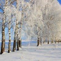 Зимний день. :: Сергей