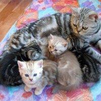 Из жизни кошек :: Galina Solovova