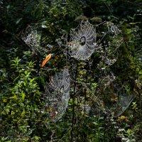 Время пауков :: Heinz Thorns