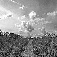Плывут по небу облака :: Нина Синица