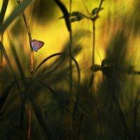 Jungle :: Gulfiya Sunny photos