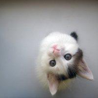 мое маленькое чудовище :: promezh_ utok