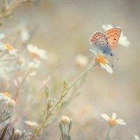 бабочка :: Виталий Буряк