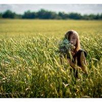 поле пшеницы :: Oksana Ditkina