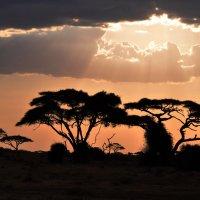 Африканский закат :: Алексей Романов